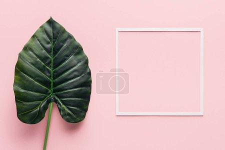 粉红色的绿色棕榈叶和白色框架的顶部视图, 简约的概念