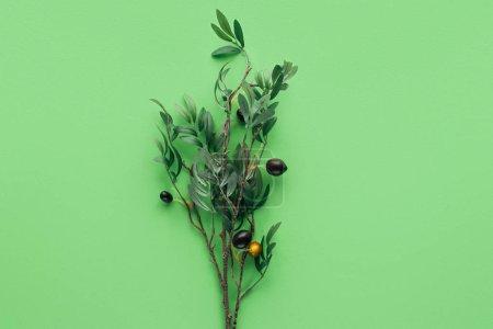 树枝的最高视图与绿叶和装饰浆果在绿色