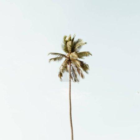 孤独的一个热带异国情调的椰子树对大蓝天。中性背景,复古暖色调。夏季和旅游概念普吉岛, 泰国.