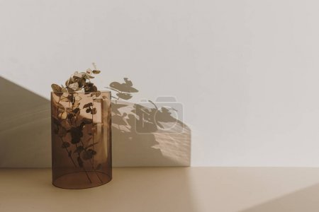 Eucalyptus branch in tan glass vase with sunlight shadows on the wall. Minimal interior decoration design